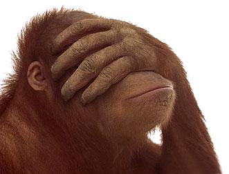 Diseño Web como Monos