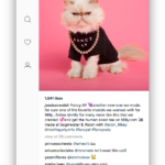 Ramme: Gestionar Instagram en tu escritorio de Windows, Linux y Mac OS X
