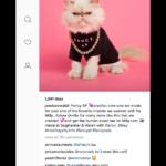 Ramme: Gestionar Instagram en tu escritorio de Windows, Linux y Mac OS X
